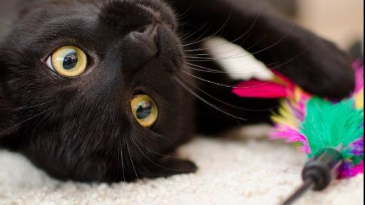 Conheça as doenças virais que mais afetam os gatos