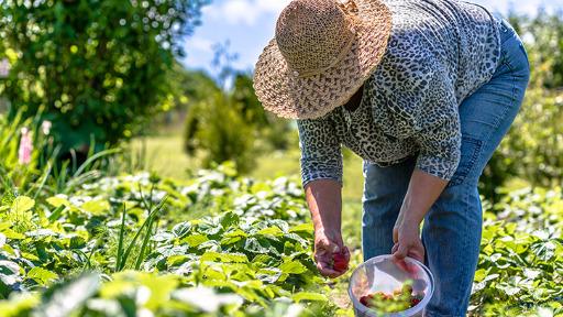 Agricultura Regenerativa é considerada tendência para os próximos anos