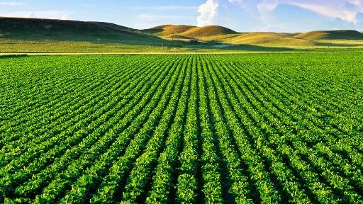 Startups do setor do agronegócio ocupa a terceira posição entre 45 segmentos