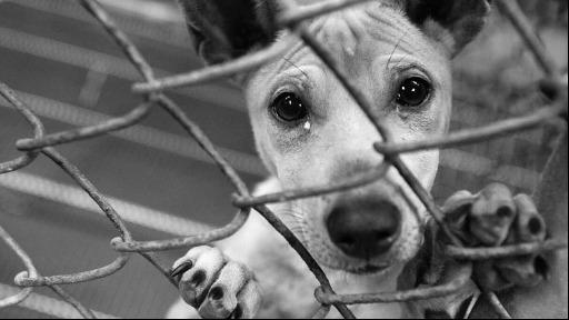 Vereador de São Carlos está cobrando por uma campanha de conscientização contra o abandono de animais