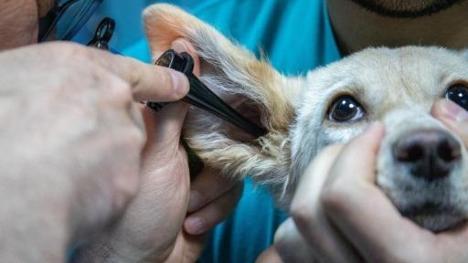 Prefeitura de Ribeirão reconhece que o programa de castração da cidade está sem veterinário