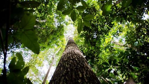 Biodiversidade: a necessidade pós-pandemia na recuperação de florestas
