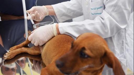 Especialista comenta sobre os benefícios e as indicações para a castração animal