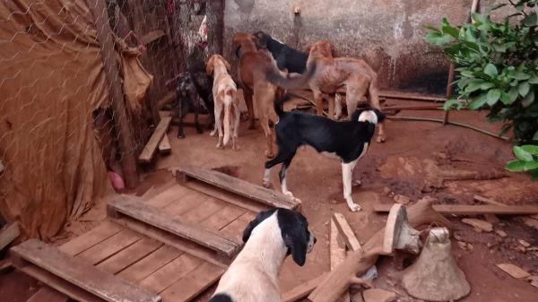 Cães com sinais de maus-tratos em Batatais - Foto: Divulgação/ GCM