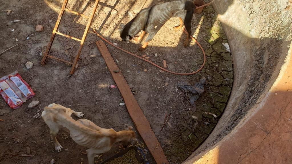 Especialista pede que a população tenha o costume de denunciar casos de maus-tratos a animais