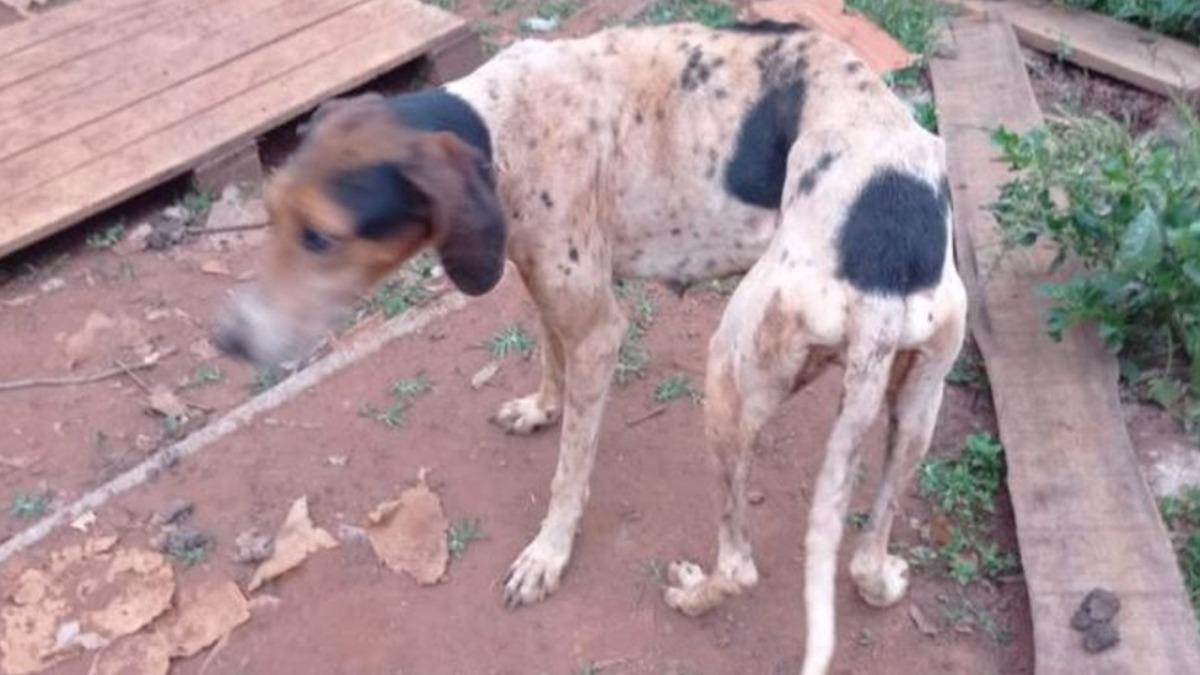 Polícia Civil de Batatais resgata diversos cães de uma chácara com sinais de maus tratos