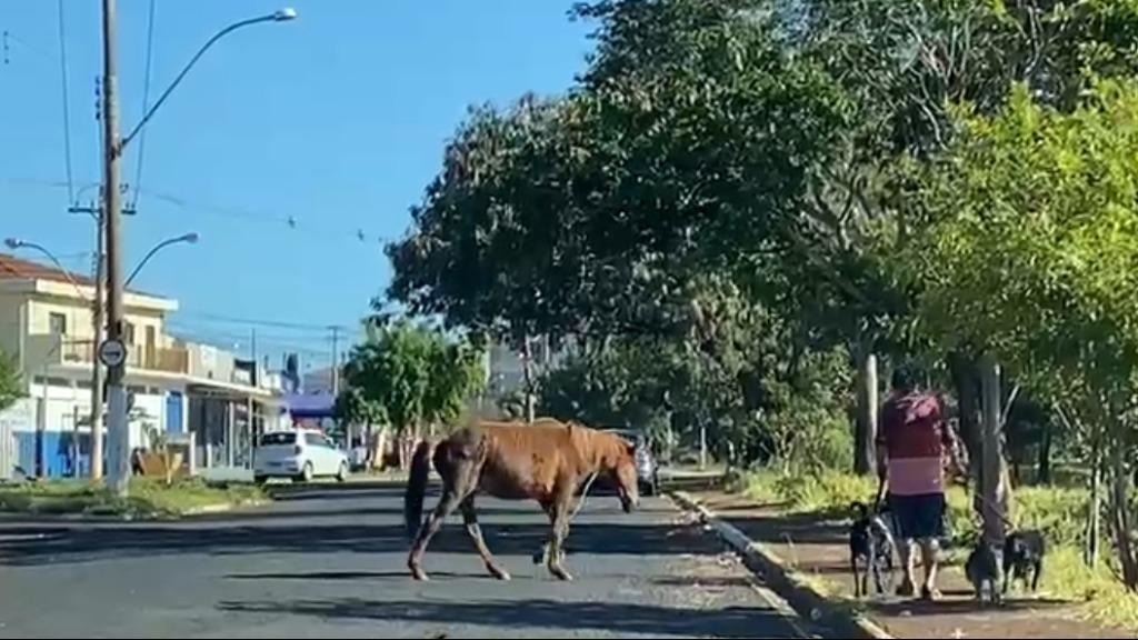 Cães, gatos, cavalo e até porcos... flagrantes de animais em vias públicas de Ribeirão aumentam