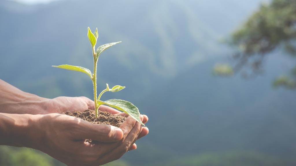 Respeito ao meio ambiente