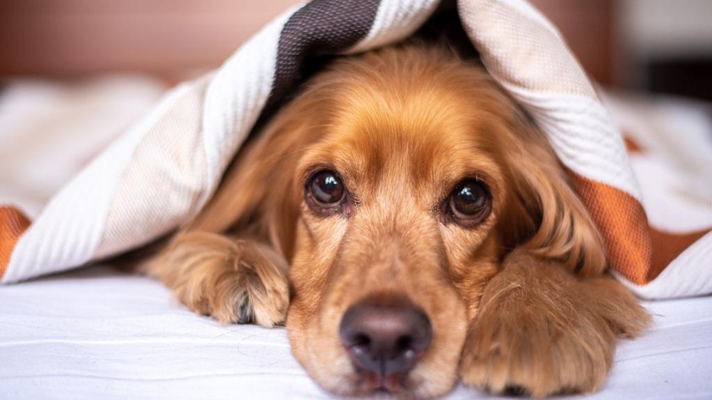 Especialista celebra a sanção da lei que exige que quem comete maus-tratos a animais arquem com as despesas veterinárias