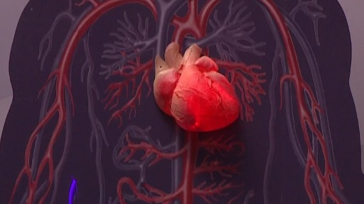 Doenças cardiovasculares são as que mais causam mortes no mundo