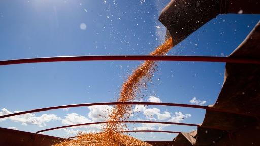 Quais os cuidados para evitar pragas em grãos armazenados