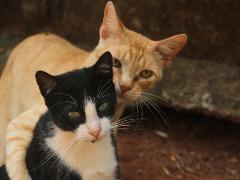 O que muda no comportamento de um gato após a castração?