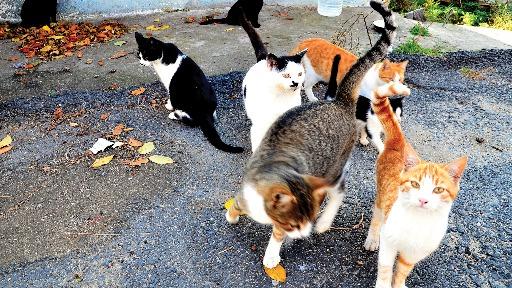 Especialista em bem-estar animal orienta os tutores a como identificar o comportamento alimentar dos gatos