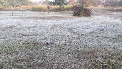 Saiba o efeito do frio e das últimas geadas na pecuária