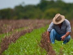 Há vagas para técnicos agrícola - Foto: Da reportagem