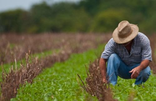 Valor da produção agrícola nacional bate recorde de R$ 470,5 bilhões
