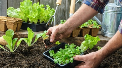 Isolamento aumenta o interesse das pessoas em ter uma horta em casa