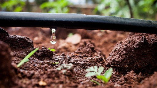 Entenda o impacto da escassez hídrica no agronegócio