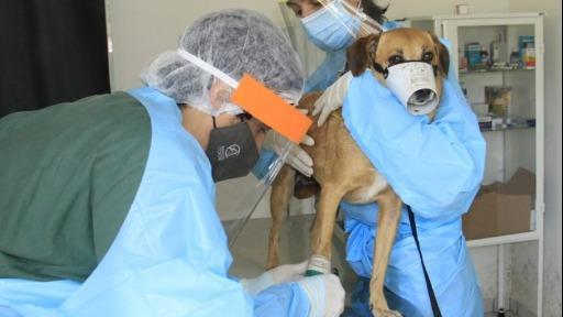 Mês de março é usado para campanhas de conscientização e combate aos problemas renais em animais