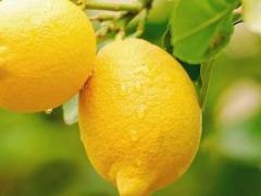 Conheça receita de limonada para turbinar a imunidade