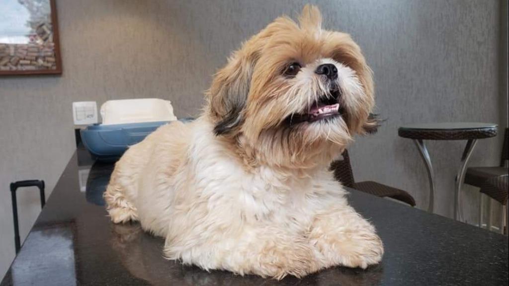 Espaços pequenos afetam na qualidade de vida dos cães?