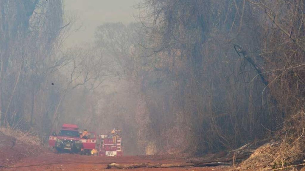 Mata de Santa Tereza ainda vive processo de recuperação após incêndio em 2014