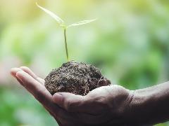 Sistemas integrados acumulam oito toneladas de carbono por hectare por ano
