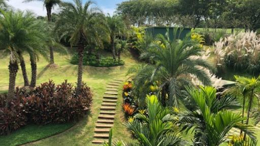 Paisagismo tropical ostenta texturas e cores perenes