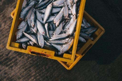 Saiba os perigos dos metais pesados encontrados nos peixes