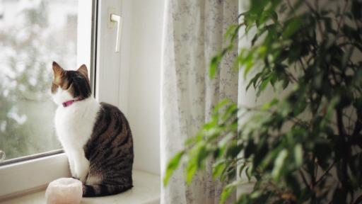 Como os pets se comportam em apartamentos?