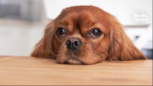 Você sabe qual o grau de consciência do animal?