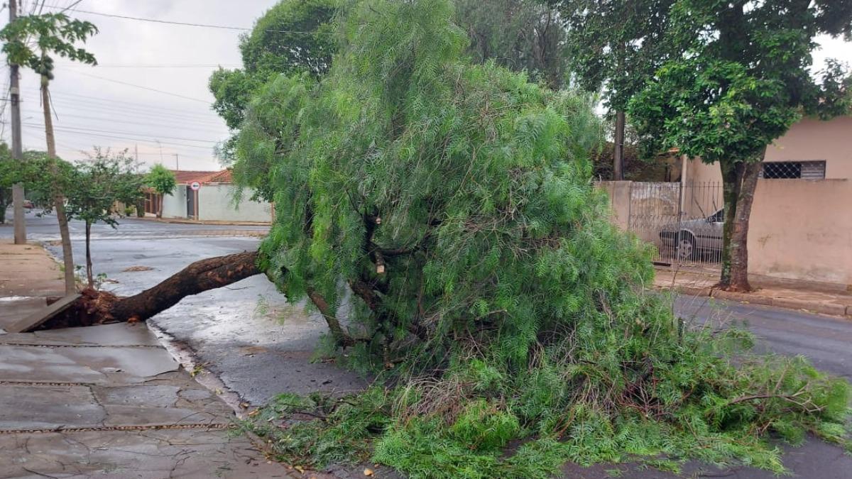 Chuva de granizo derrubou 10 árvores, em Araraquara; Defesa Civil reforça alerta