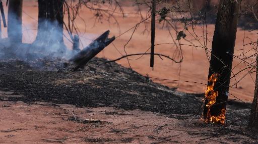 Especialista comenta sobre medidas para coibir queimadas ilegais
