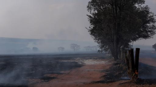 Agricultores contabilizam prejuízos das queimadas