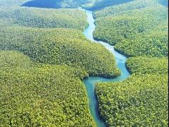 Conheça alguns dos diversos sons da gigantesca Amazônia