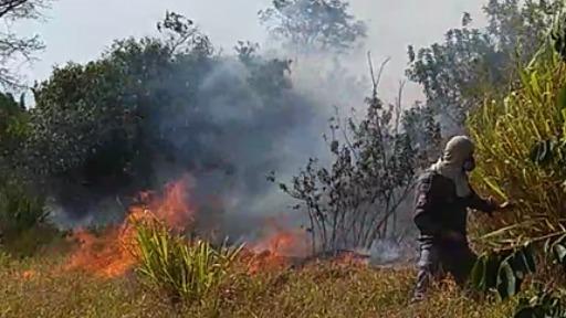 Aumento de queimadas nesta época seca do ano e os impactos para o meio ambiente