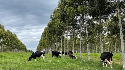 são carlos agropecuária - Foto: ACidade ON - São Carlos