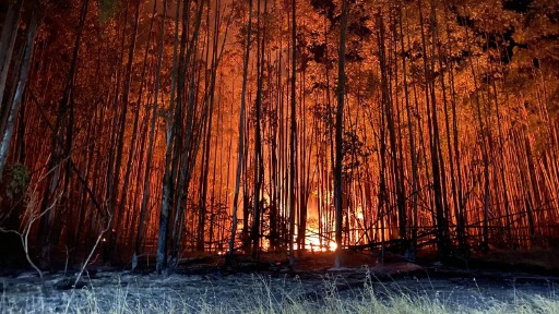 Devido ao incêndio que ocorreu no cerrado da UFSCar professor explica o que é o fogo e como ele acontece