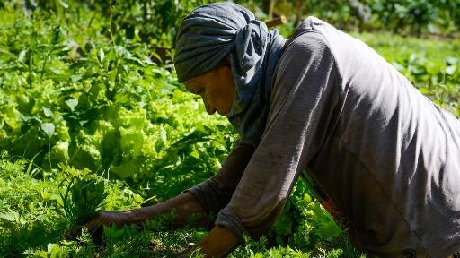 Geadas do mês de julho provocaram aumento no preço das hortaliças